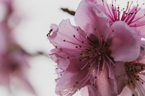 19.03...Der Frühling !!?
