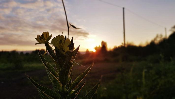 13.06...NR-Sonnenaufgang
