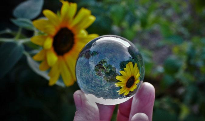 19.08...NR-Sonnenblumen