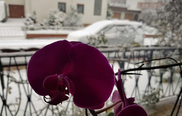 14.12...NR-Wintereinbruch