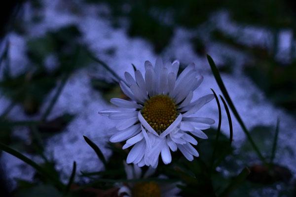 09.02...NR-Im Garten