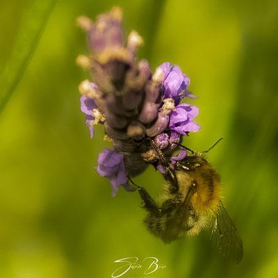 "15.07.""Lavendel & Biene""!"