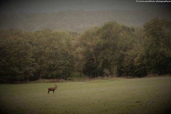 27.09...WI-Tierpark