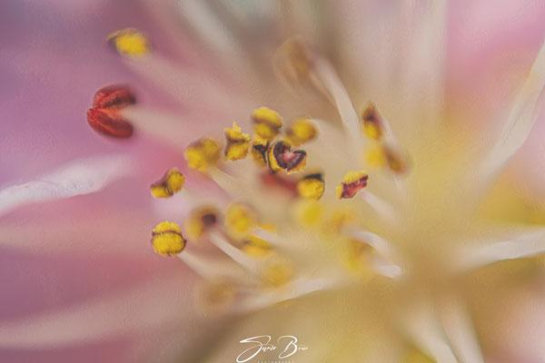 16.03...Blütezeit im Garten !