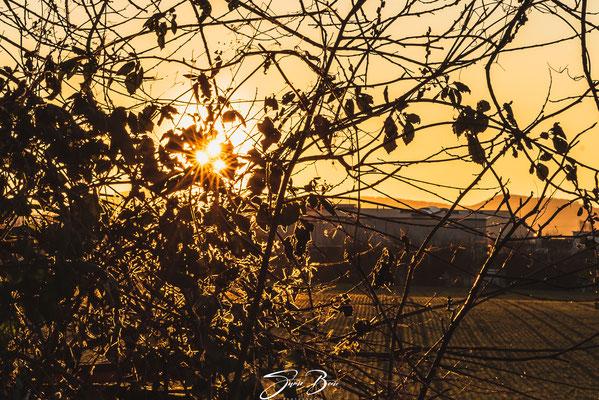 """02.03.""""Sonnenuntergang durch den Busch gesehen """"!"""