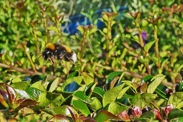 17.05...Die Biene kehrt zurück !