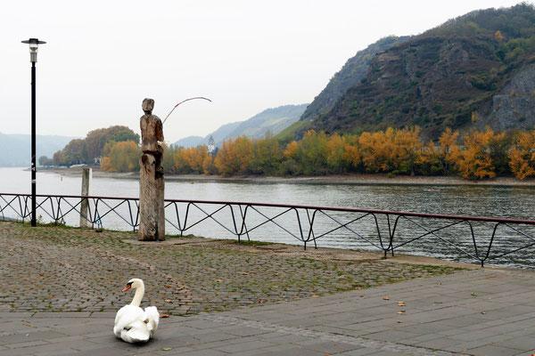05.11..Rheinpromenade in Andernach