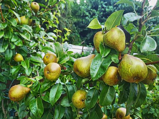 12.07...Es regnet im Garten !