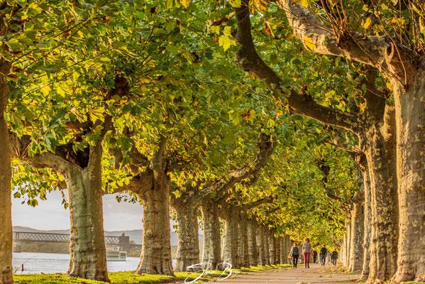 """22.10.""""Rheinpromenade-Engers""""!"""