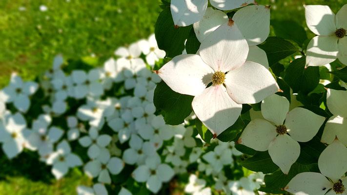 03.06...NR-Im Garten