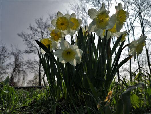 07.04...Frühling in Block