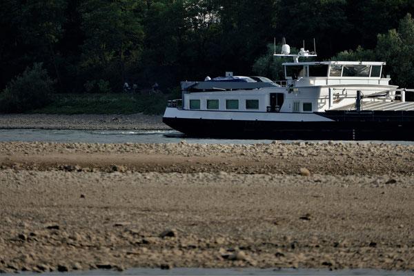 26.07...Bendorf-Niedrigwasser im Rhein