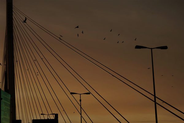 08.02...NR-Abend-Raiffeisenbrücke