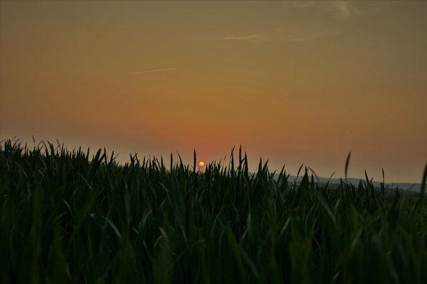 22.04...NR-Sunset