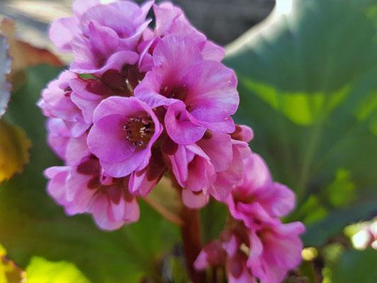 08.04...NR-Der Frühling ist unterwegs !