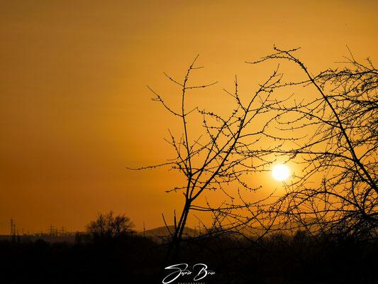 """25.02.""""Saharastaub Sunset""""!"""
