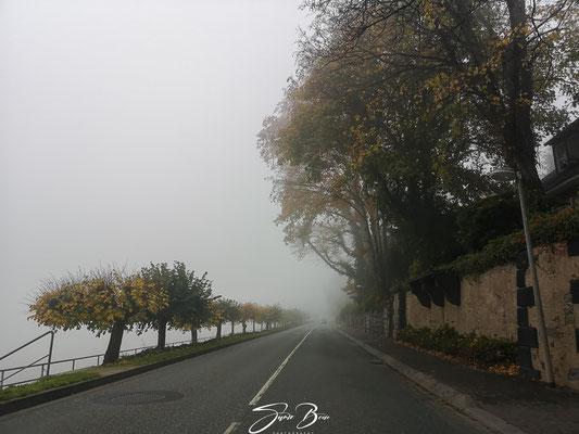 """17.11.""""noch ein bisschen goldene Herbststimmung""""!"""