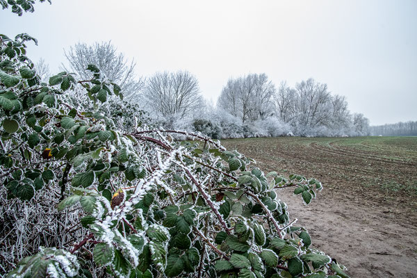 23.01...Wintereinbruch auf Engerser Feld !