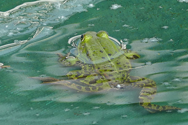 19.05...Ein Froschleben beginnt mit der Paarung !?