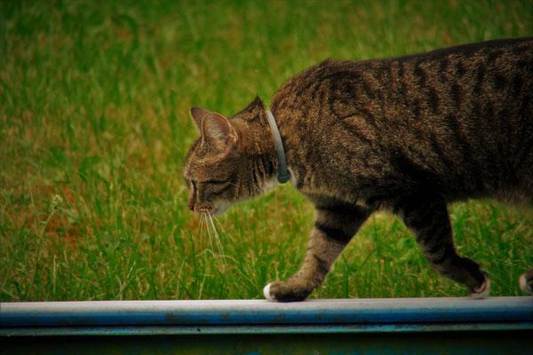 """12.06...NR-Im Garten Katze """"PIPI"""""""