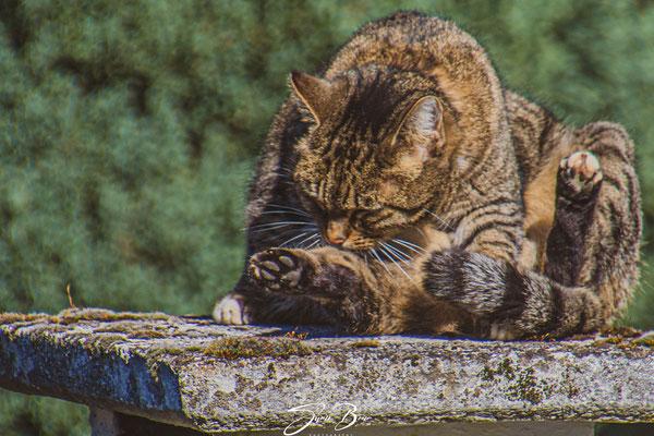 """28.03...""""Katze auf Grill"""" !"""