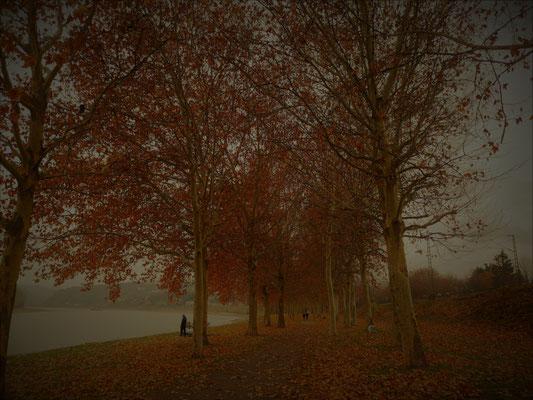 25.11...NR-Irlich im Nebel
