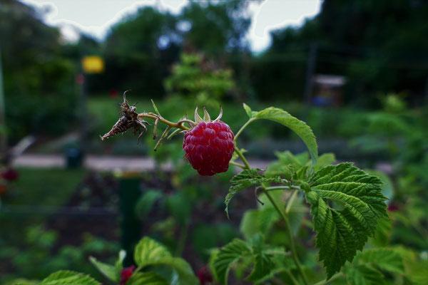 16.06...NR-Im Garten