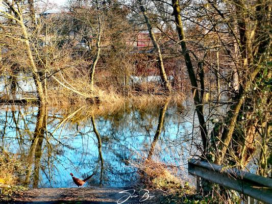 06.02..Hochwasser in Deichstadt