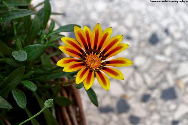 08.09.-Blumen & Mramor