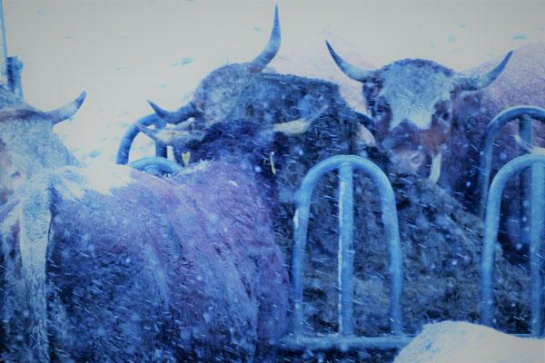 06.01...Schnee in Bayern