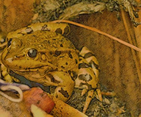 26.03...Frosch im Frühling