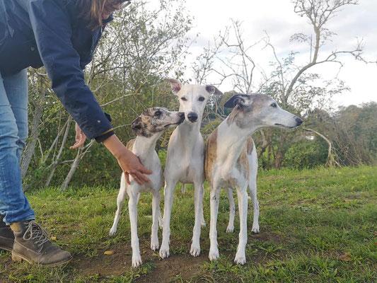 Monty (Betty Barkley Independence) mit seinen Kindern Daphne und Draco (Deimos v. B.)