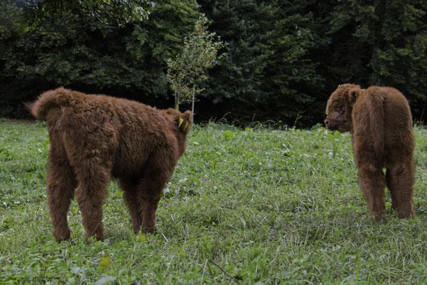 Schotten im Luzerner Seetal