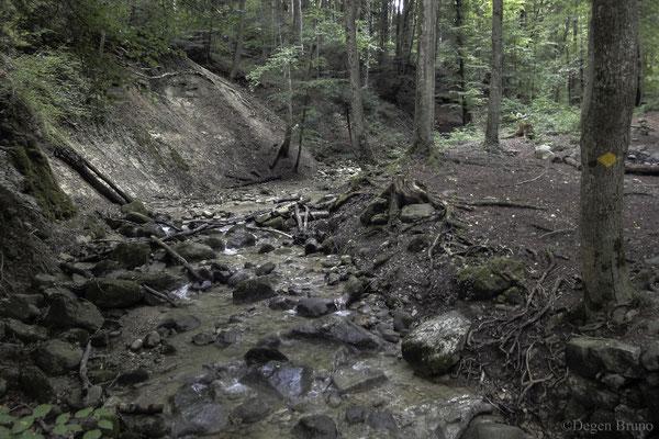 Im Dünkelbachgraben