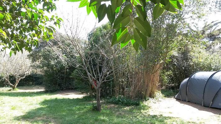 Camping à Six Fours : Emplacements Figuier, Pommier et Cerisier
