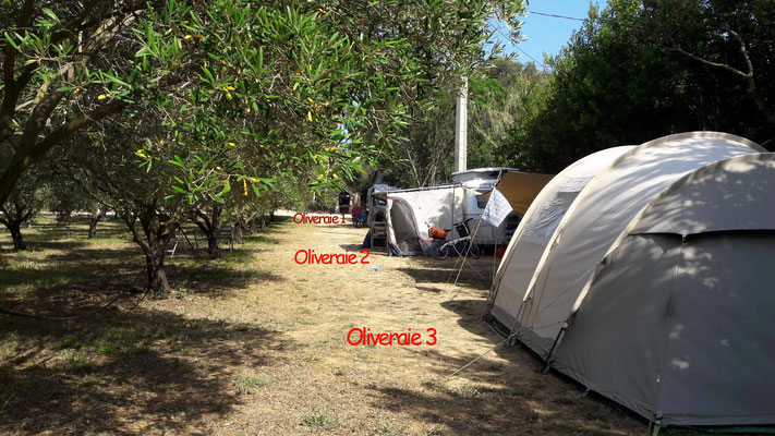 "Camping Le Brusc : Emplacements ""Oliveraie"""