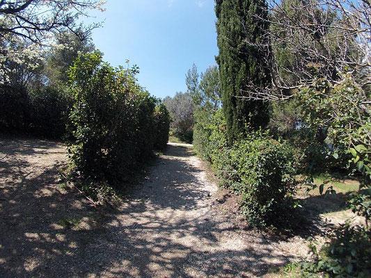 Camping au Brusc : Chemin entre Poirier et Eucalyptus