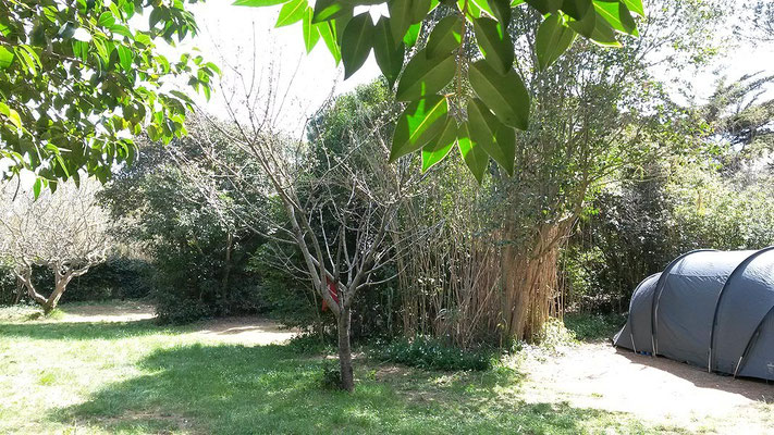 Emplacements Figuier, Pommier et Cerisier