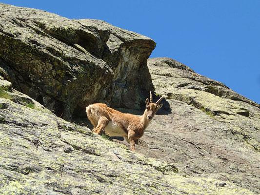 """Croisé dans """"La Blonde"""", un local et fort grimpeur"""