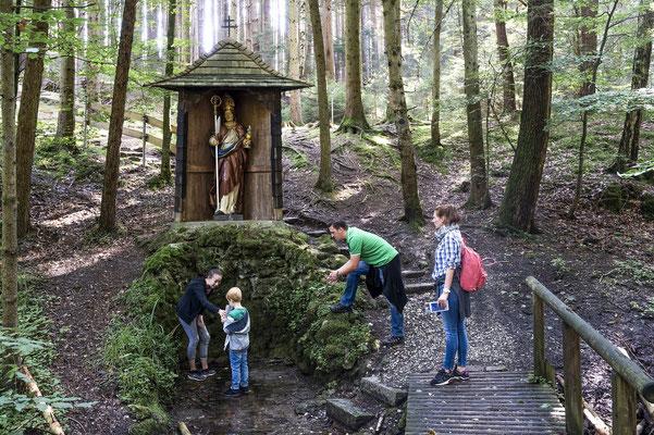 Mystische Stimmung an der Quelle im Altoforst © Dachauer Land, Gregor Lengler