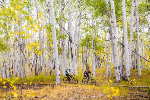 Biken inmitten der beeindruckenden Espen-Wälder  © Tamara Susa
