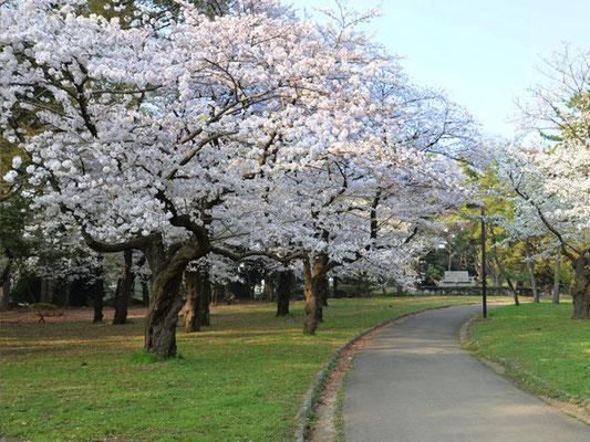 代々木公園散策