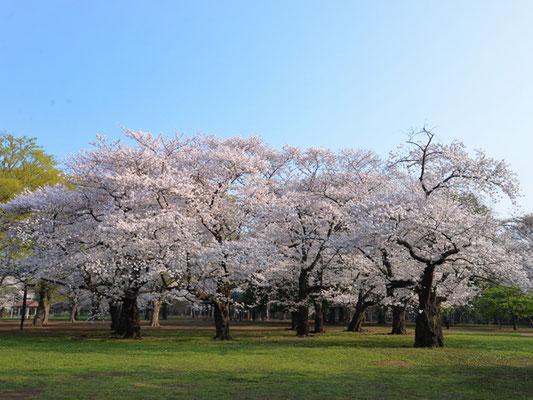 プチ新宿御苑的な芝生スペース。