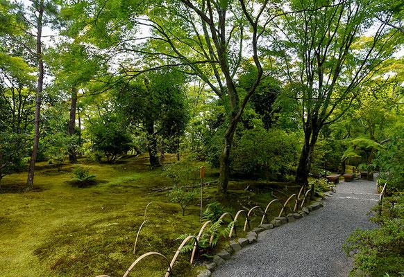 緑に覆われた参道。