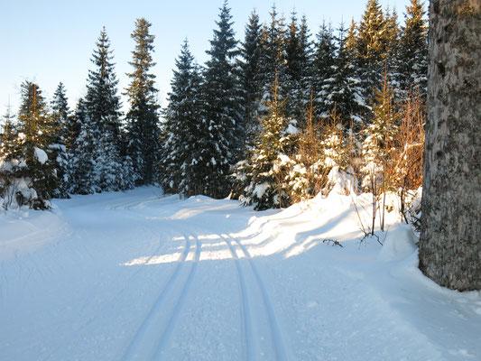 Bei - 8 Grad braucht man nicht zu frieren. Ski - Langlauf wärmt den Körper.