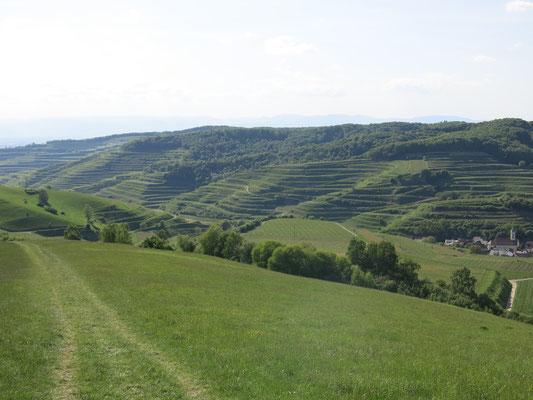 https://www.vogtsburg.de/de-de/freizeit-veranstaltungen/veranstaltungskalender   Walking with an excellent view