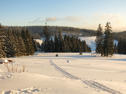Skispur im Schneefeld