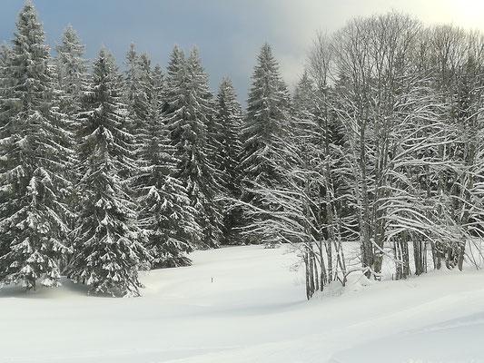 Winterliche Stimmung am Rinken