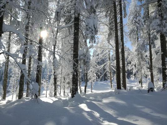 03_12_2017, viel Schnee am Notschrei, herrliche Sonne im Dezember