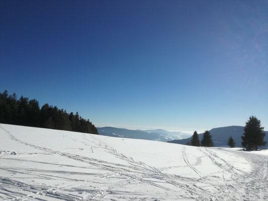 Notschrei, Schauinslandspur, mit Alpenblick.